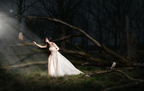 Picture forest, girl, night, the moon, owls