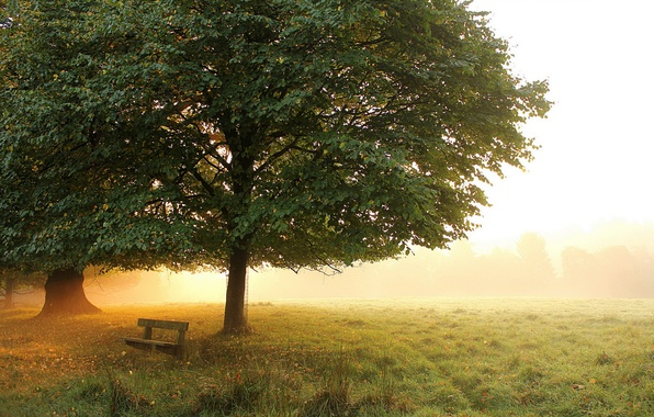 Picture autumn, trees, bench, fog, Park, morning, meadow, early