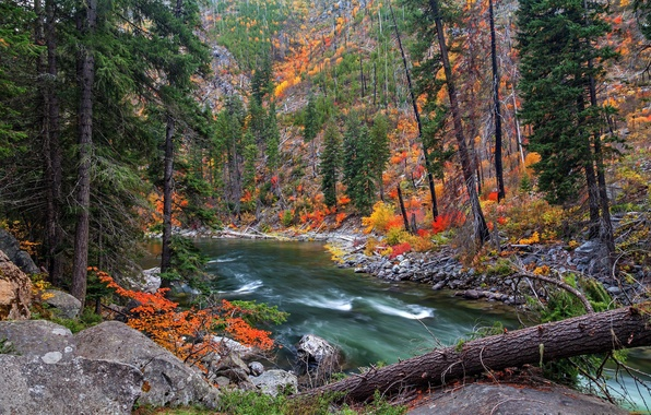 Picture autumn, forest, trees, river, stones, slope