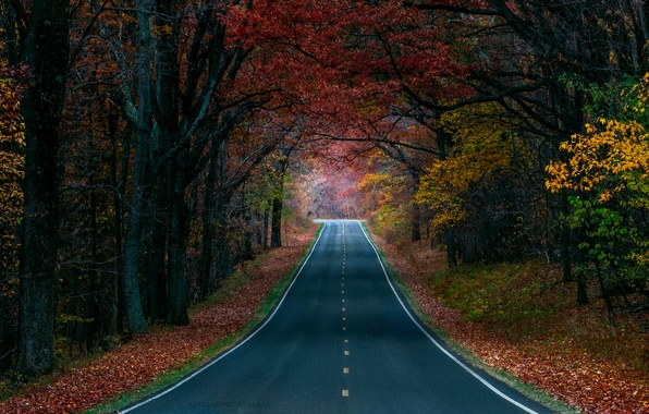 Picture road, autumn, forest, trees, nature, paint