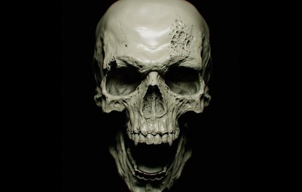 Picture sake, vampire, bones, teeth