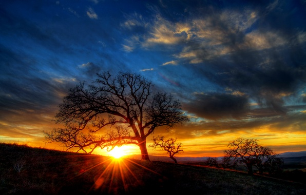 Picture the sky, clouds, rays, sunset, tree, silhouette, hill