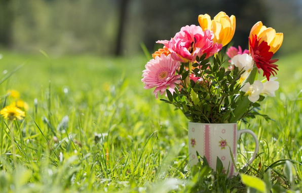 Picture grass, bouquet, mug, tulips, gerbera