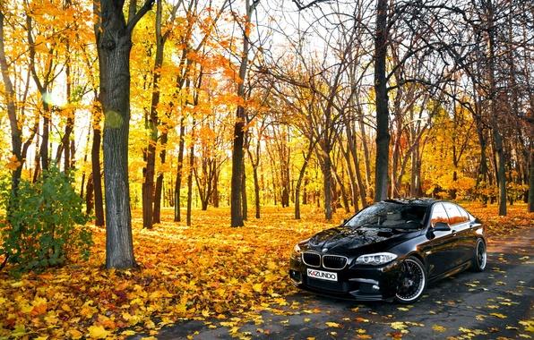Picture leaves, Autumn, BMW, BMW, black, Autumn, F10, 550X