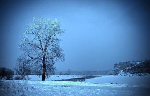 Picture frost, field, snow, tree, Winter, slide