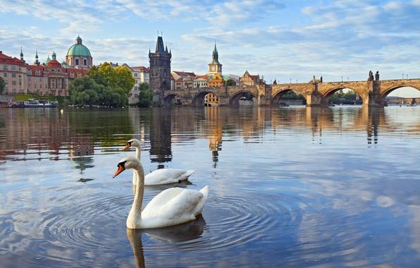 Picture river, tower, home, Prague, Czech Republic, swans, Vltava, Charles bridge