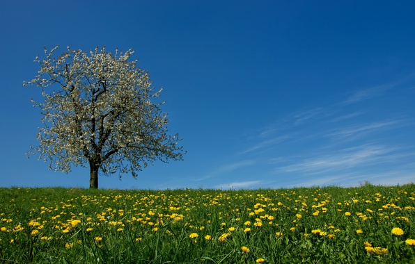 Picture the sky, grass, flowers, tree, spring, meadow, dandelions