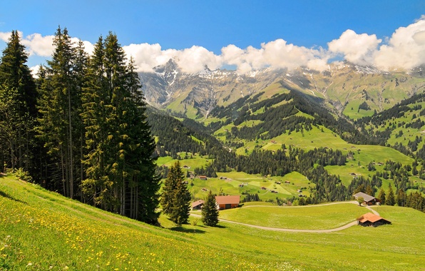 Picture forest, the sky, grass, clouds, trees, flowers, mountains, nature, house, spruce, valley