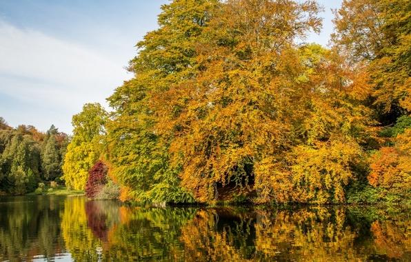 Stourhead trees