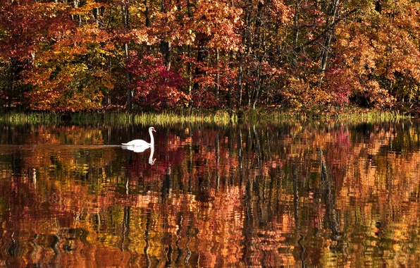 Picture autumn, forest, water, trees, landscape, nature, lake