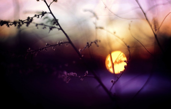 Picture grass, the sun, macro, sunset, sprig, The evening, blur, Blik