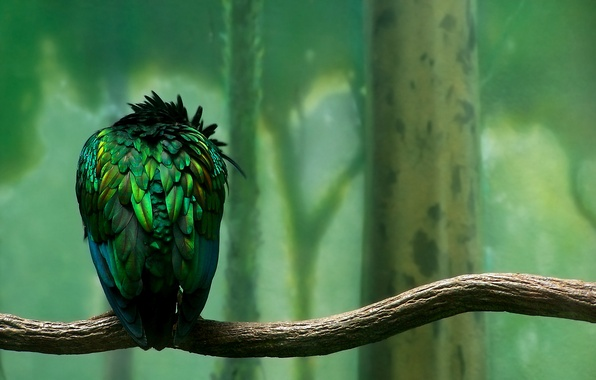 Picture green, Bird, Branch, Feathers