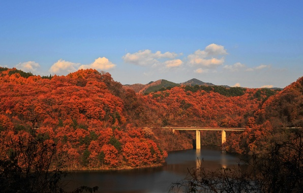 Picture autumn, forest, the sky, mountains, bridge, river