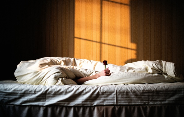 Picture rose, hand, bed