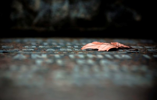 Picture leaves, macro, red, background, widescreen, Wallpaper, blur, leaf, wallpaper, leaf, widescreen, background, macro, full screen, …