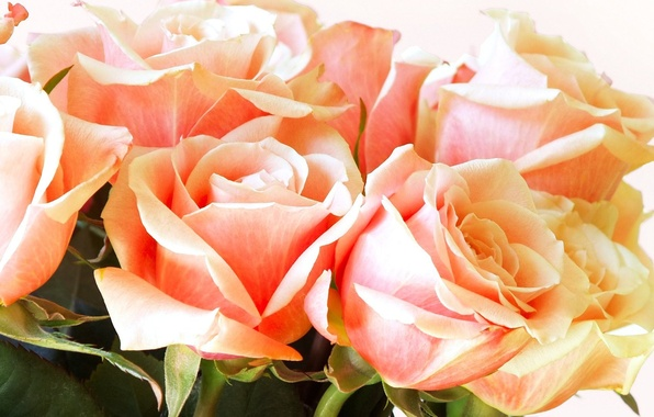 Picture Macro, Flowers, Bouquet, Roses