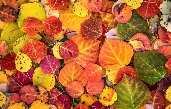 Photo wallpaper autumn, paint, foliage, macro