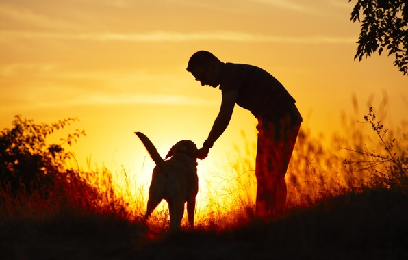 Picture light, nature, each, dog, Guy
