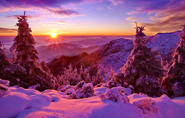 Picture winter, forest, the sky, snow, trees, sunset, mountains, spruce