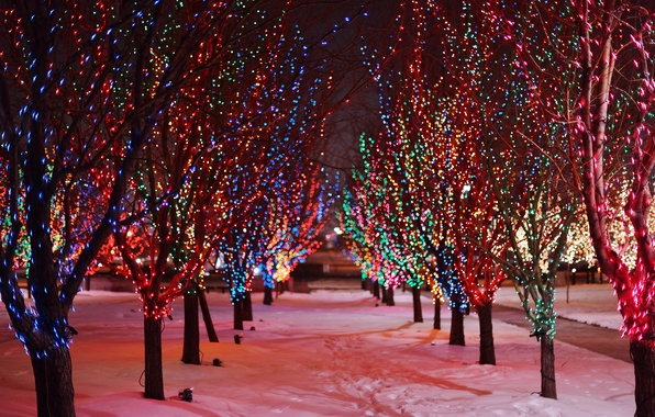 Picture winter, road, snow, trees, night, branches, traces, nature, lights, lights, garland, alley, colorful, holidays