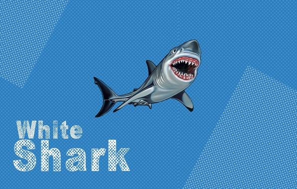 Picture white, blue, shark, pop art