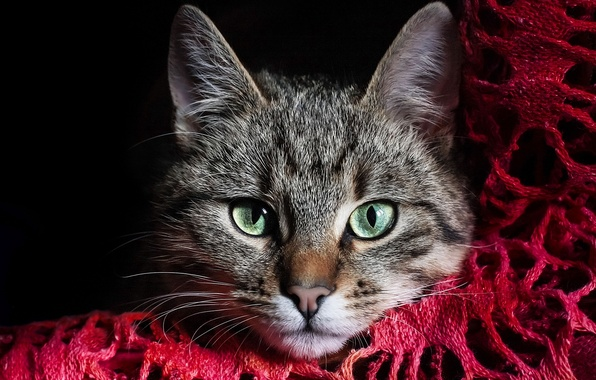 Picture cat, eyes, cat, face, grey, green, fabric, red, striped