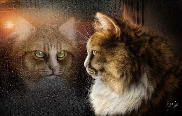 Picture cat, reflection, rain, mood, window