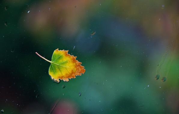 Picture glass, water, drops, rain, window, water, window, leaf, single, Nikon D90, one rainy, autumn leaf