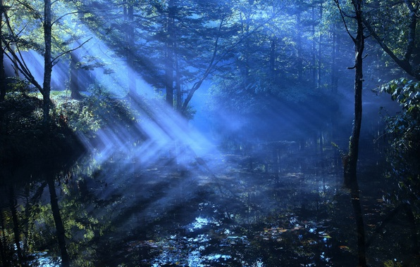 Picture forest, rays, light, river, haze