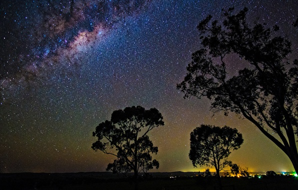Picture space, stars, trees, night, space, the milky way