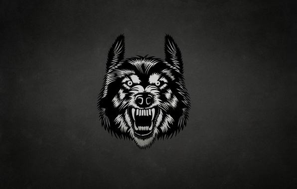 Picture face, the dark background, wolf, wolf