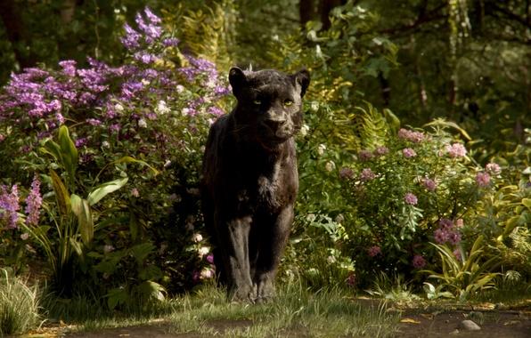 Picture Panther, Bagira, The Jungle Book, The jungle book