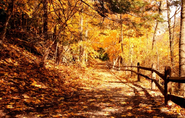 Picture light, trees, Park, foliage, Autumn, fence
