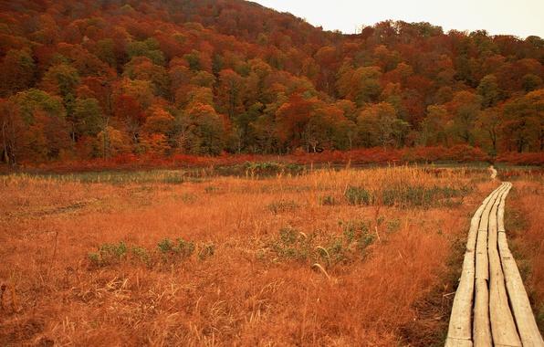 Picture road, autumn, Japan