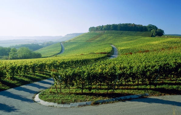 Picture road, Germany, the vineyards