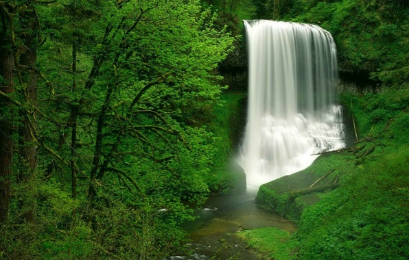 Picture forest, waterfall, USA, USA, Oregon