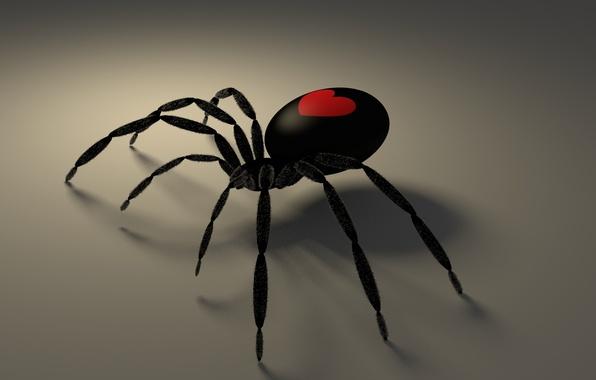 Picture Gothic, heart, shadow, spider, Valentine