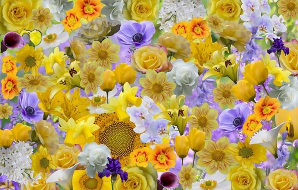 Picture flowers, collage, rose, sunflower, petals, iris