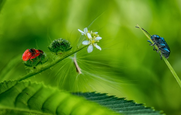 Picture forest, flower, grass, leaves, insects, nature, beetle