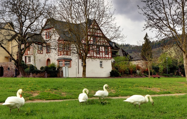 Picture grass, trees, landscape, bench, Germany, village, swans