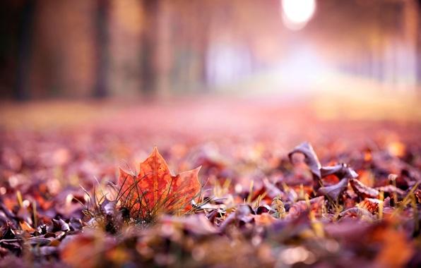 Picture autumn, leaves, macro, widescreen, Wallpaper, blur, beautiful, leaf, wallpaper, leaf, widescreen, background, autumn, leaves, macro, …