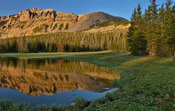 Picture forest, summer, the sky, grass, reflection, flowers, mountains, nature, lake
