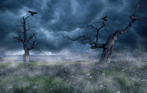 Picture trees, birds, fog
