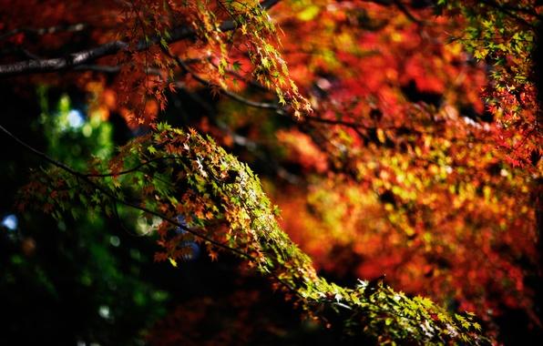 Picture autumn, branches, nature, foliage
