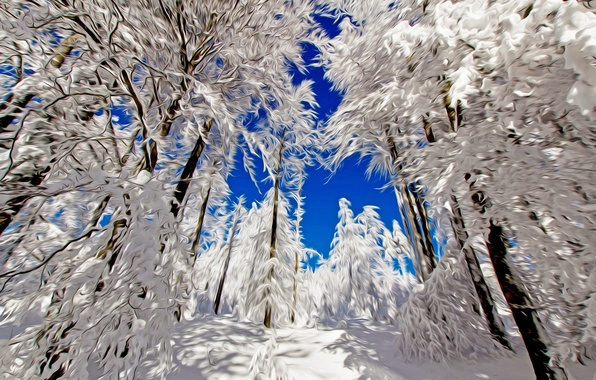 Picture winter, forest, the sky, snow, trees, line, landscape, nature, strokes