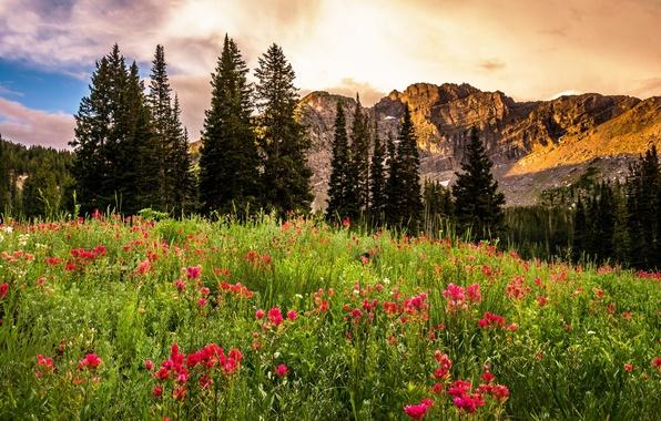 Picture trees, landscape, flowers, sunrise, rocks, glade, USA, Utah, Utah, Albion Basin