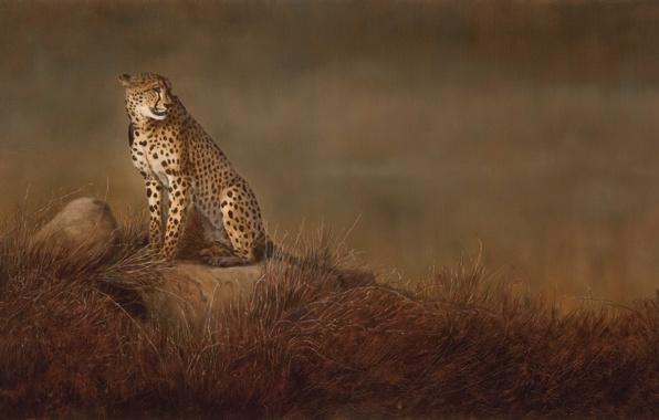 Picture cat, grass, stones, background, picture, art, Cheetah, Savannah, wild, Linda Schroeter