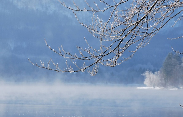 Picture winter, water, snow, river, branch, water, winter, snow, lakes