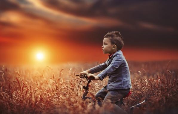 Picture field, sunset, bike, mood, boy