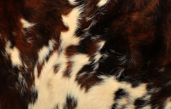 Picture texture, wool, skin, fur